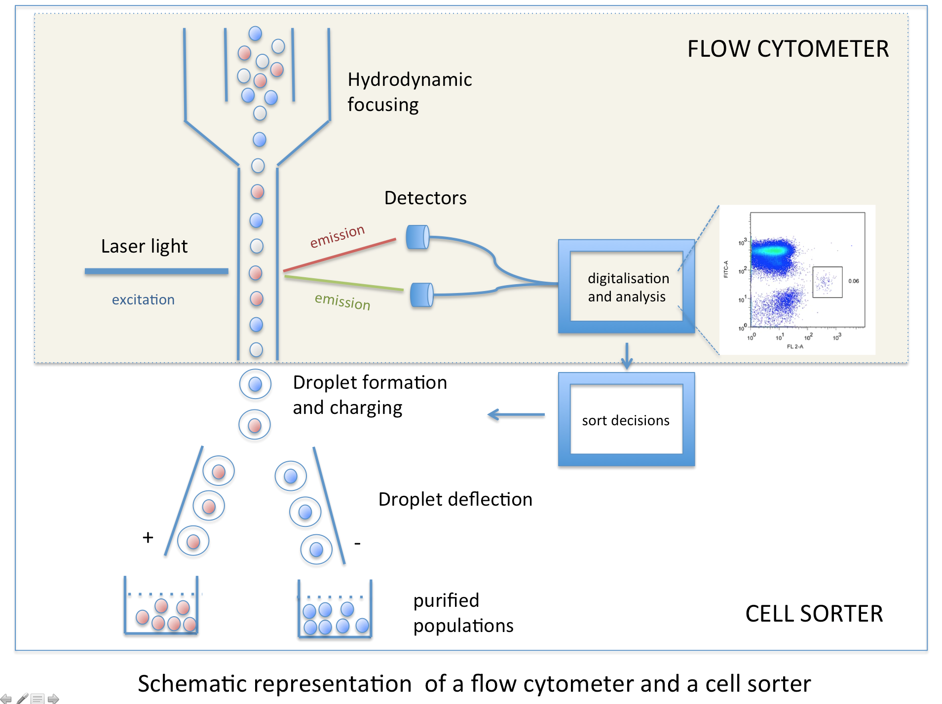 international flow cytometry market drivers and It is an easy-to-use and highly intuitive software package for both flow cytometry data collection and analysis, it provides a powerful range of professional flow cytometry data analysis functionalities, as well as turn-key data analysis functions.